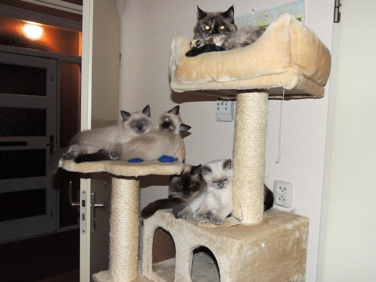 W12_086-Laleh,-Rico,-Niño,-Mili-en-Feline-2014-07-03_web
