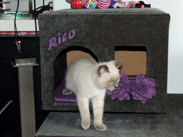 W13_105-Rico-2014-07-12_web