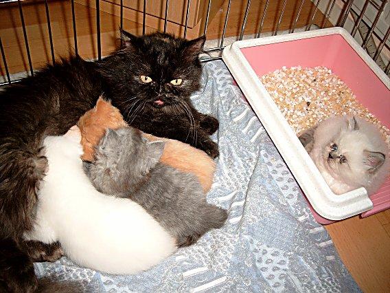 Jessie en kids 2004-06-12, 02