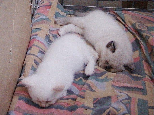 Bangles en Feline slapen a 16-08-02