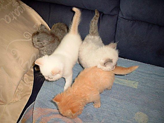 Banjer, Dazzle, Teaser en Ricky 2004-06-11, 01