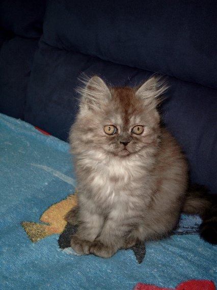 Daisy 21-09-2002a