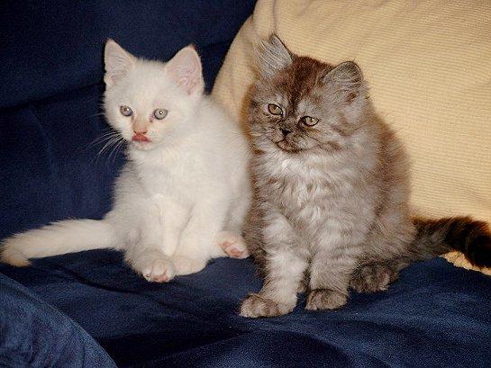 Daisy en Bangles (ong. 15-09-2002)
