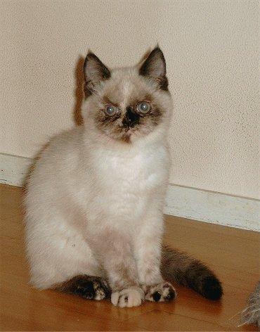 Feline 10 okt 2002