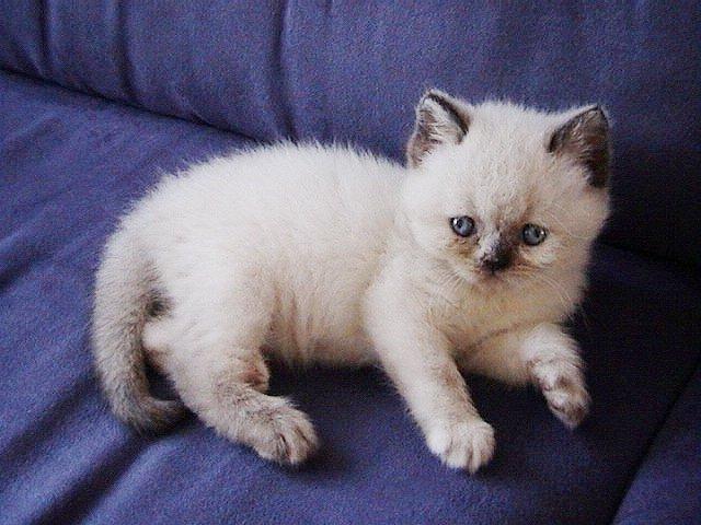 Feline 2a 16-08-02
