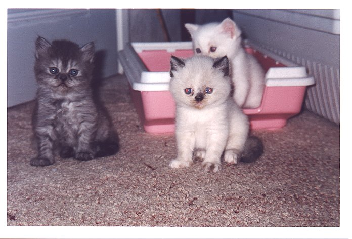 Feline, Daisy en Bangles in Krommenie