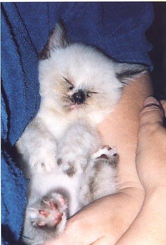 Feline in slaap week 38a