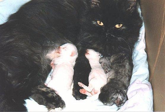 Jessie met jonge kittens