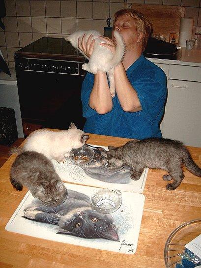 Kittens eten geven (week 38 2002)