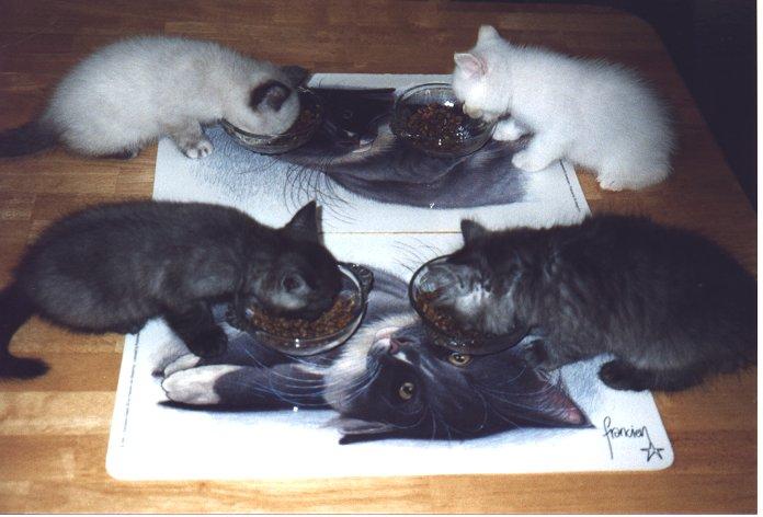 Kittens eten