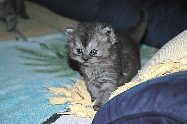 Mickey 2004-08-03, 01