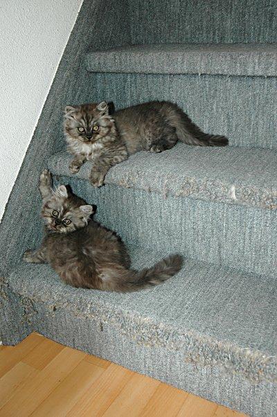 Mickey en Boyke 2004-09-08, 01