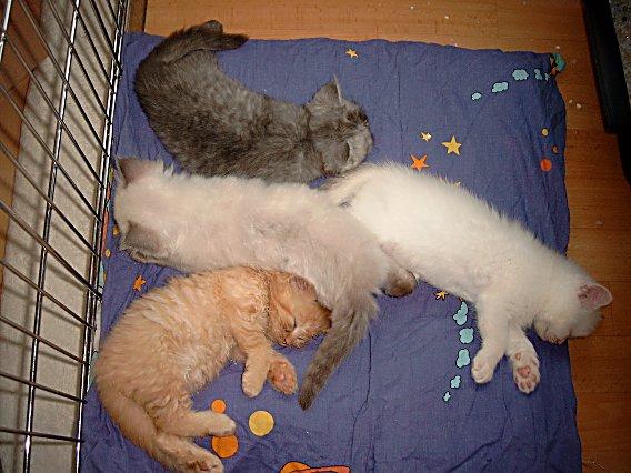Nest 2004-06-22, 02