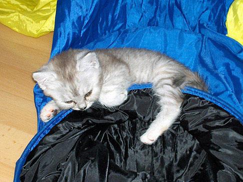 Blue Tess 2005-08-06, b