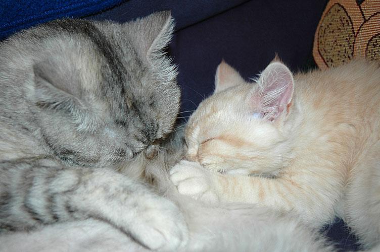 Frodo en Blue Tess 2007-12-30, 02