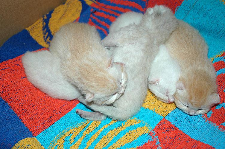 Kyra, Frodo, Laleh, Macho en Taji 2007-10-14, 01