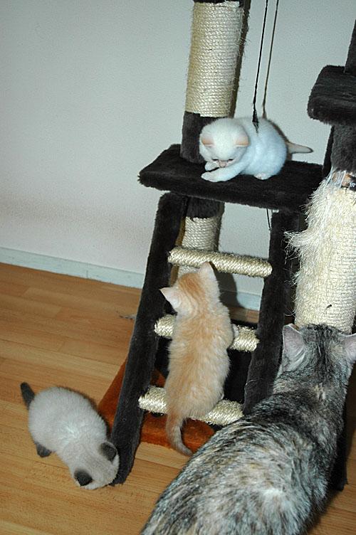 Kyra, Taji, Macho en Blue Tess 2007-11-12, 01