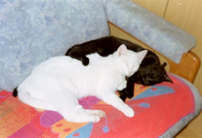 Snowy en Gabber, 2001-07-12, 03