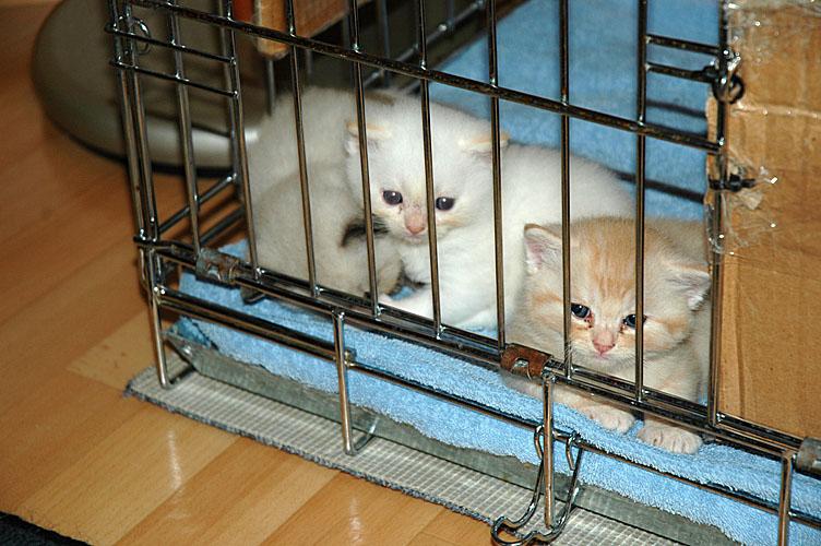 Taji, Macho en Kyra 2007-11-04, 01