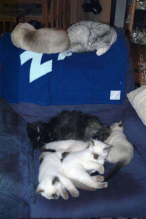 W10_Laleh, Blue Tess, Jessie en kids 2010-02-07, 01