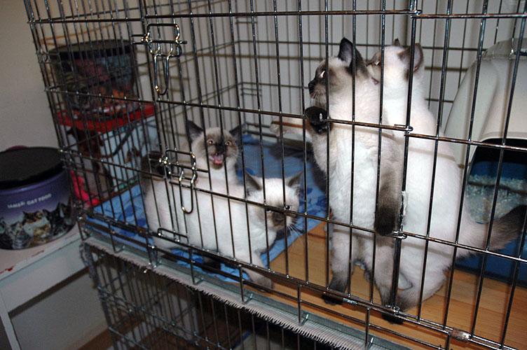 W13_Banjo, Elmo, Shanna en Kayla 2010-03-05, 02