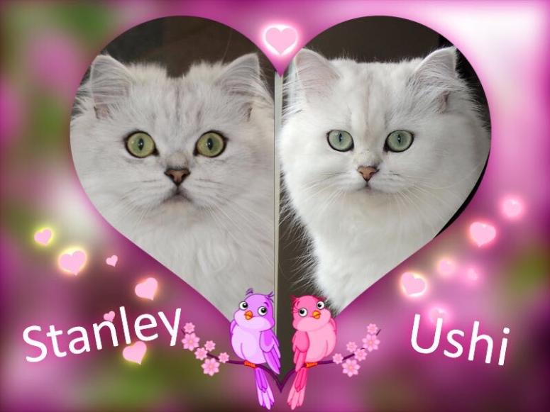 Stanley en Ushi