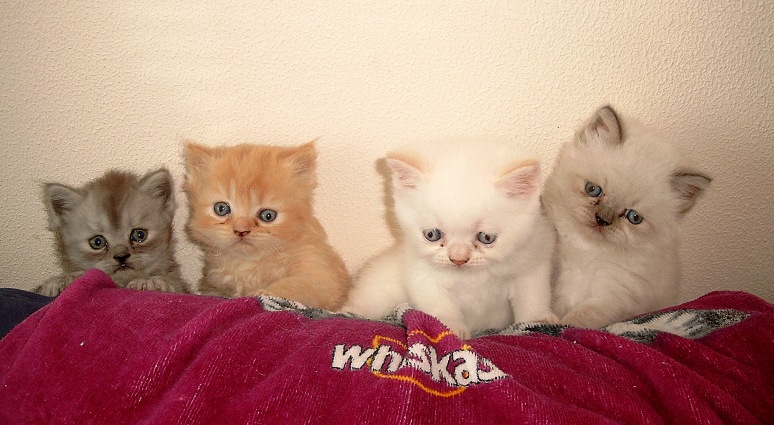 Banjer, Dazzle, Ricky en Teaser 2004-06-11, 04