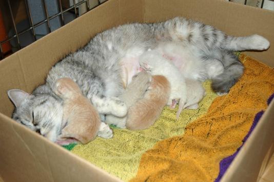 Blue Tess en kittens 2007-10-09, 03