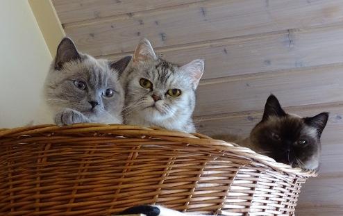 Blue Tess, Laleh en Mili 2015-04-09, 03