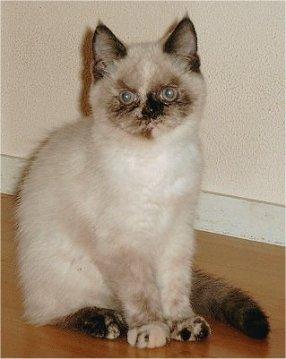 Feline 10 okt 2002a