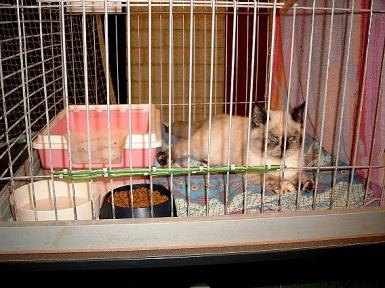 Feline 2002-11-03, 01