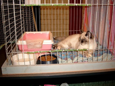Feline 2002-11-03, 02