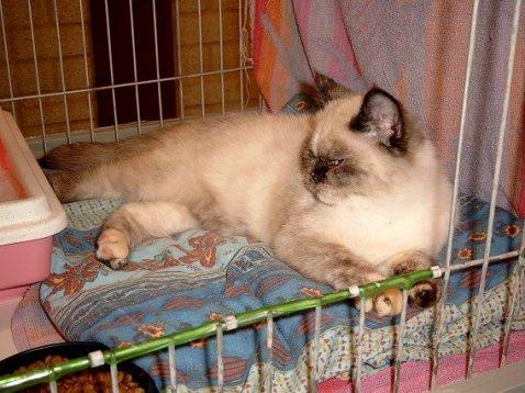 Feline 2002-11-03, 03