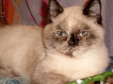 Feline 2002-11-03, 04