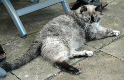 Feline 2006-07-21, 01