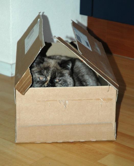 Feline 2009-03-11, 01