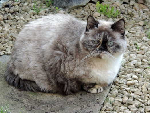 Feline 2013-07-08, 03
