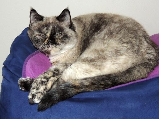 Feline 2014-03-17, 02