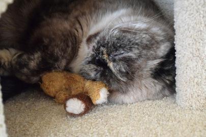 Feline 2015-04-18, 03