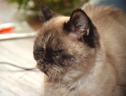 feline-2016-10-21-03