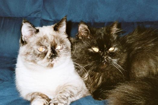 Feline en Jessie 2003-10-29, 03