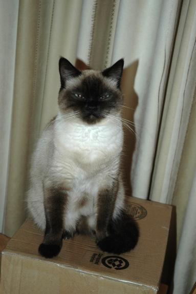 Laleh 2009-10-30, 04