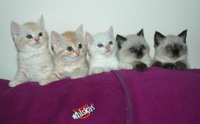 Laleh, Macho, Taji, Frodo en Kyra 2007-11-22, 10