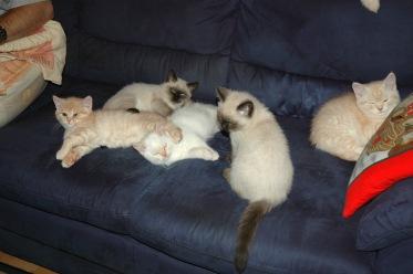 Laleh, Macho, Taji, Frodo en Kyra 2007-12-22, 03