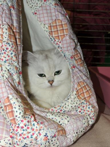 Limbra Cat Club show 2014-11-09, 25