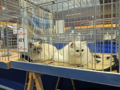 Neocat show 2014-09-28, 06_Mili en Ushi