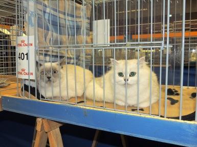 Neocat show 2014-09-28, 07_Mili en Ushi
