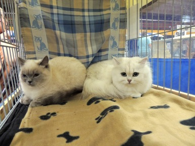 Neocat show 2014-09-28, 15_Mili en Ushi