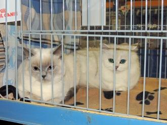 Neocat show 2014-09-28, 16_Mili en Ushi