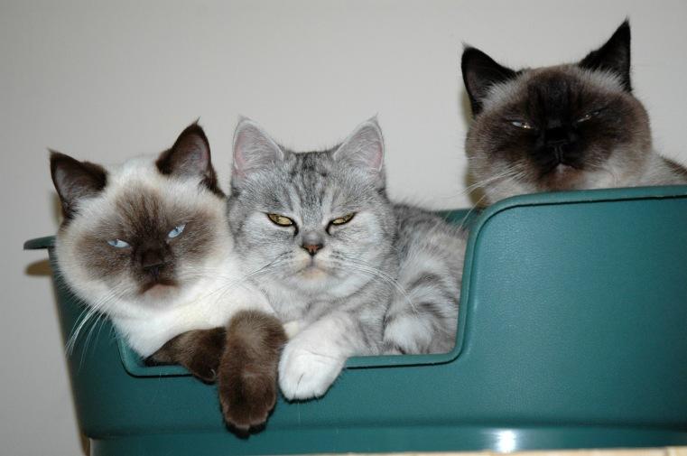Shanna, Blue Tess en Laleh 2011-10-25 ,04